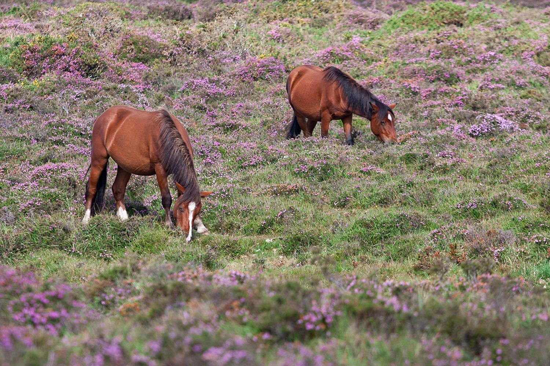 Cabalos en liberdade